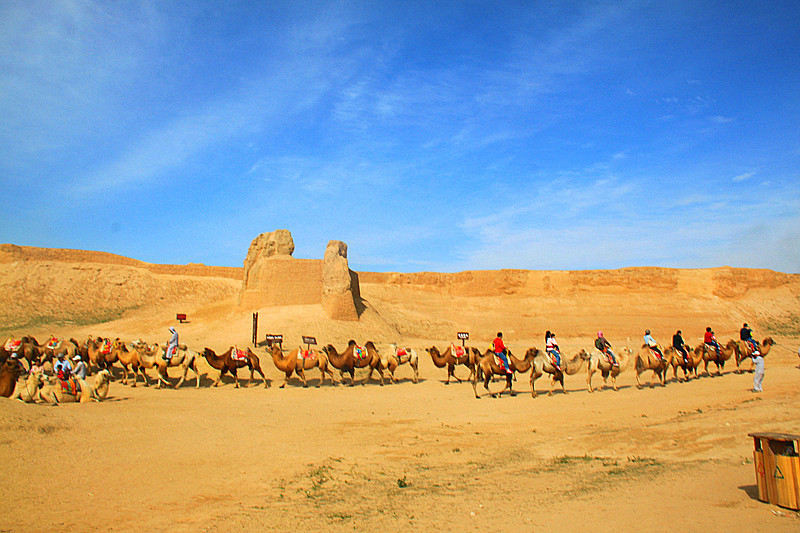 宁夏旅游风光水洞沟明长城骆驼