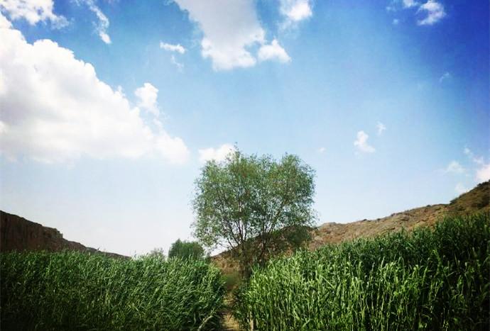 银川旅游美景水洞沟风光