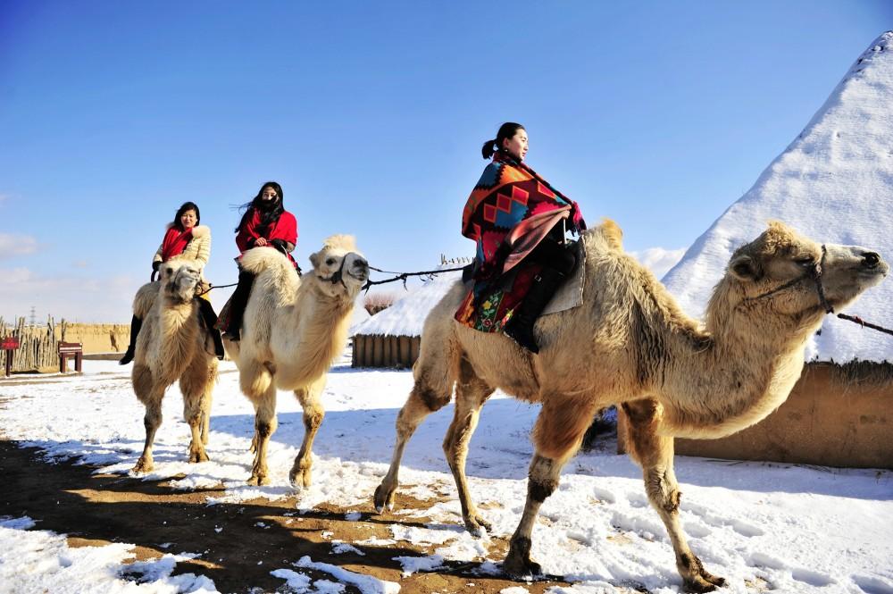 水洞沟——骑骆驼
