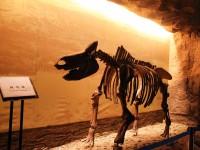 出土动物头骨 (5)