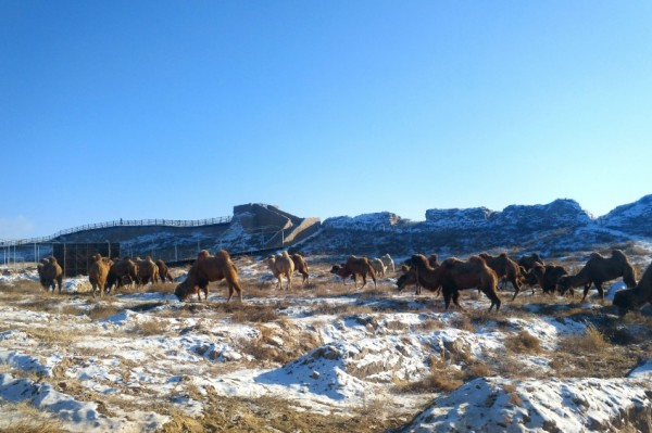 跟着《山海情》来宁夏旅游,到这里寻找西北的年味